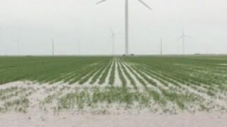 flooded fieldtaft51515.JPG