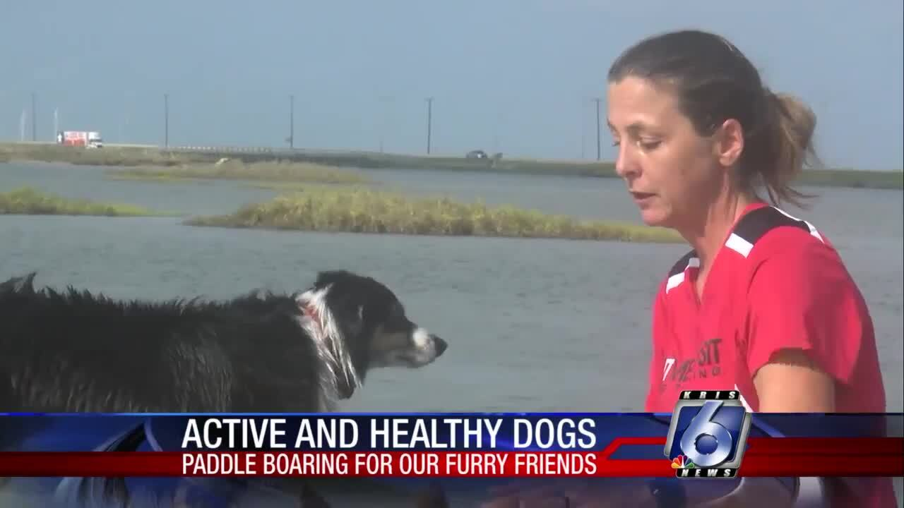 Dog experts with Sit Means Sit teach pet owners and their furry friends how to paddle board.