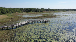 Walking Club: Exploring Crews Lake Wilderness Park in Pasco County