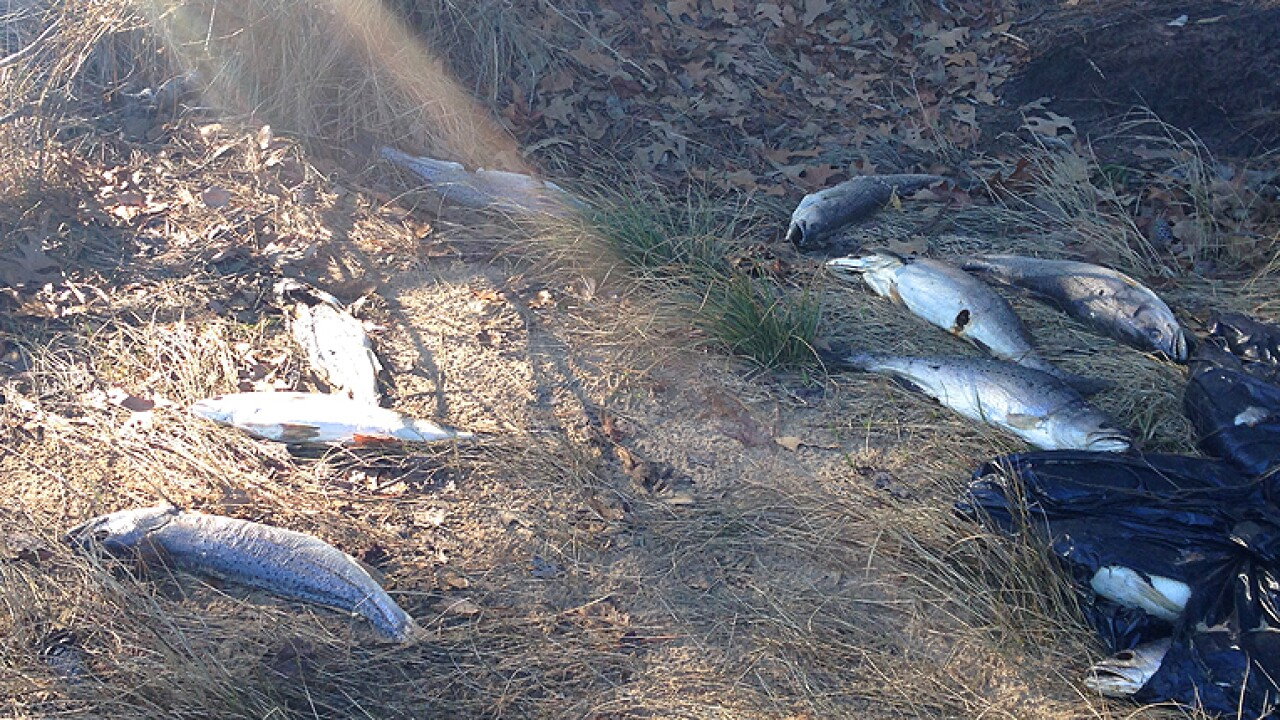 Hundreds of dead fish wash up along Chesapeakecanal
