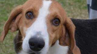 Iberia Parish Animal Shelter at capacity, desperate for adoptions