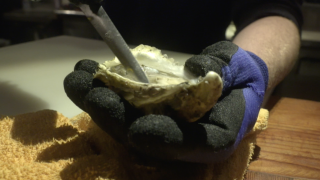 Climate change puts oyster industry on edge