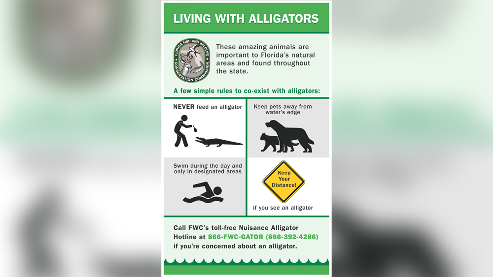living-with-alligators.png