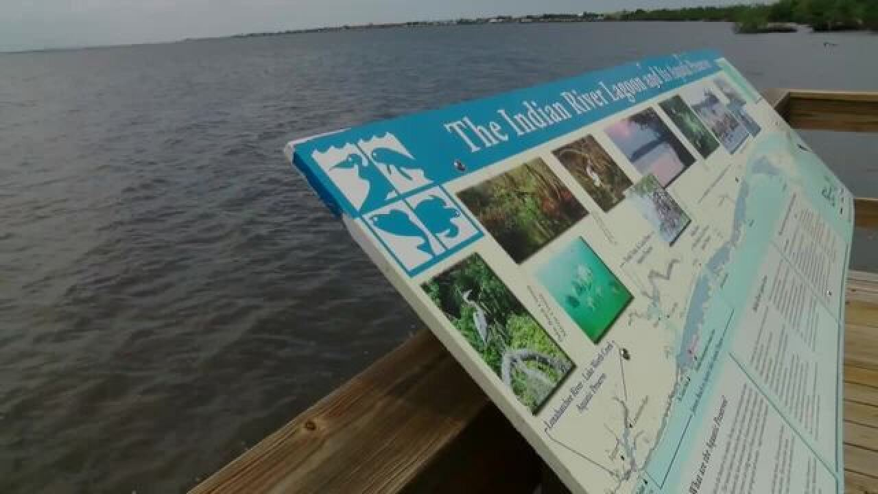 Algae spotted in the Indian River Lagoon