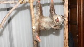 2013 Staten Island Zoological Society Ball