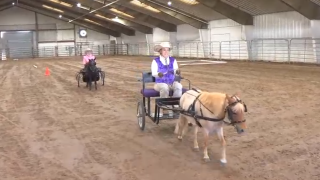 Equestrians compete at Big Sky State Games