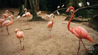 For $35, plus admission to the zoo, guests can be a part of the flock for 30 minutes.