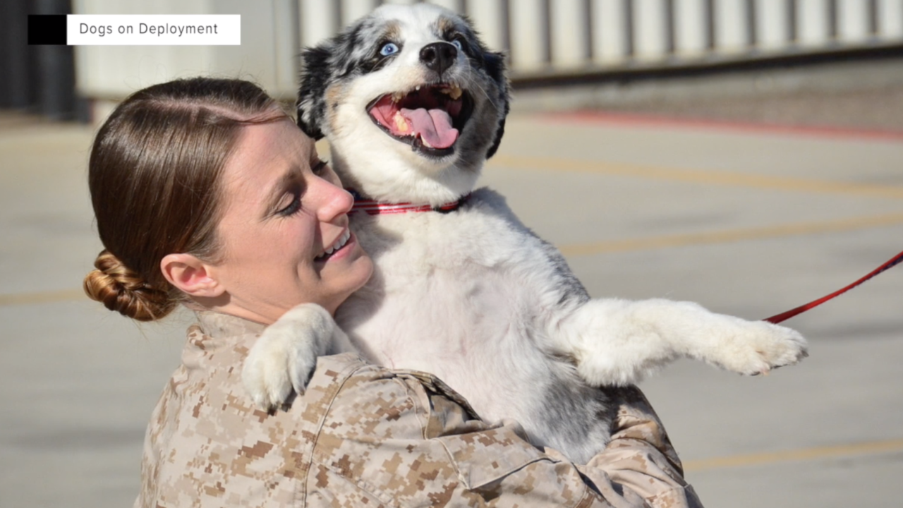 """Dogs on Deployment"" founder and CEO Alisa Johnson - seen here with her dog, JD - started the nonprofit after she and her husband faced dual deployments and needed help caring for their dog."
