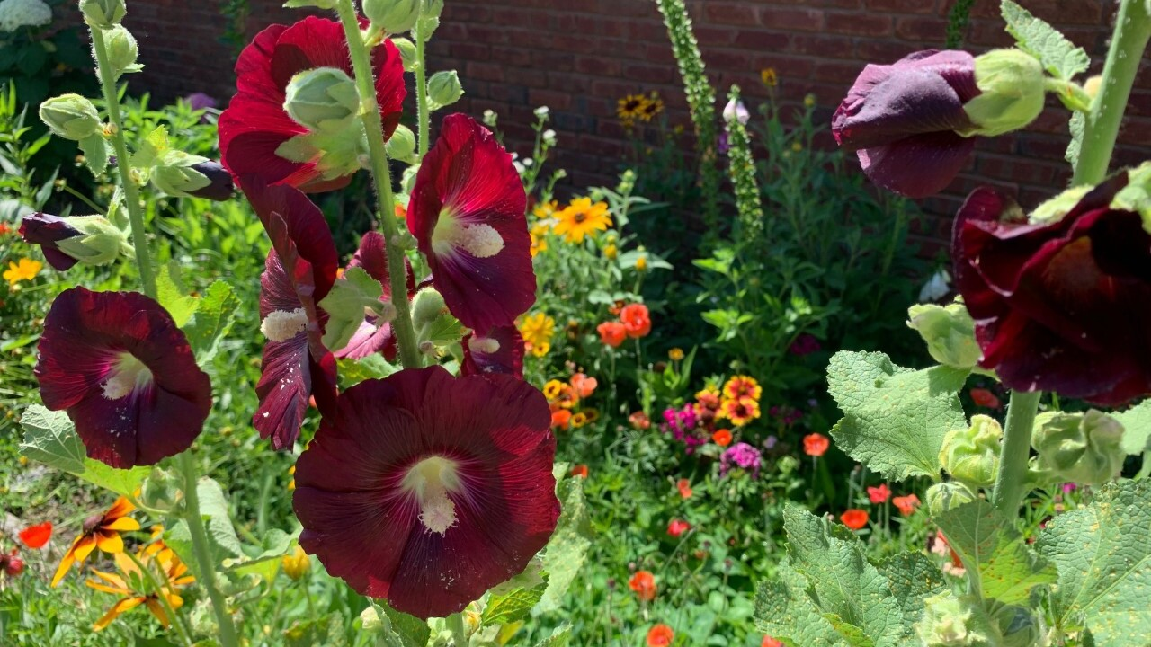 Flowers bloom on a vacant lot in Gallatin