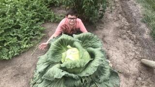 Bonnie Plants Cabbage Growing Program Henry Borgmann