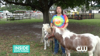 Tomorrow's Rainbow Miniature Horses Provide Free Grief Support