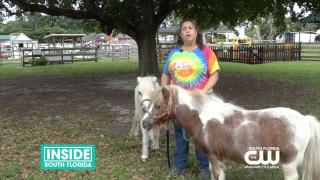 Tomorrow's Rainbow Miniature Horses Provide Free GriefSupport