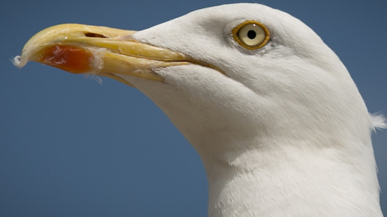 Man fined $124 for kicking seagull that ate his cheeseburger