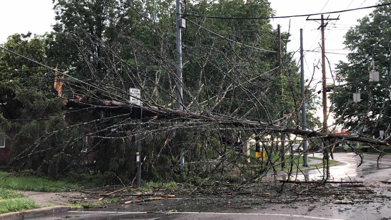 Werk and Queen City Tree Down.jpg