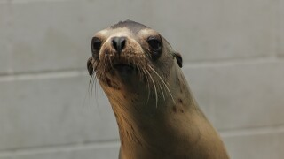 Marine Mammal Center: Sea Lion