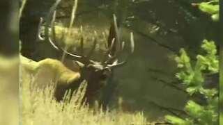 This Week in Fish and Wildlife: Be bear aware as archery season kicks off