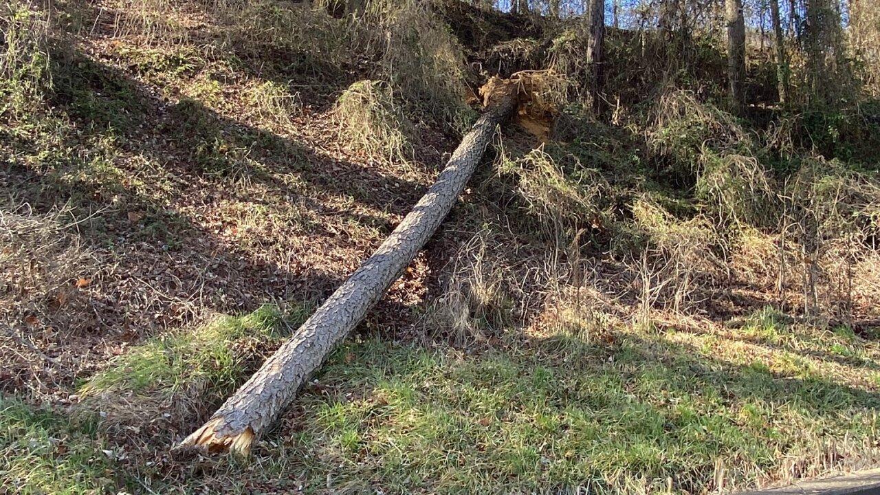 tree falls on I-95