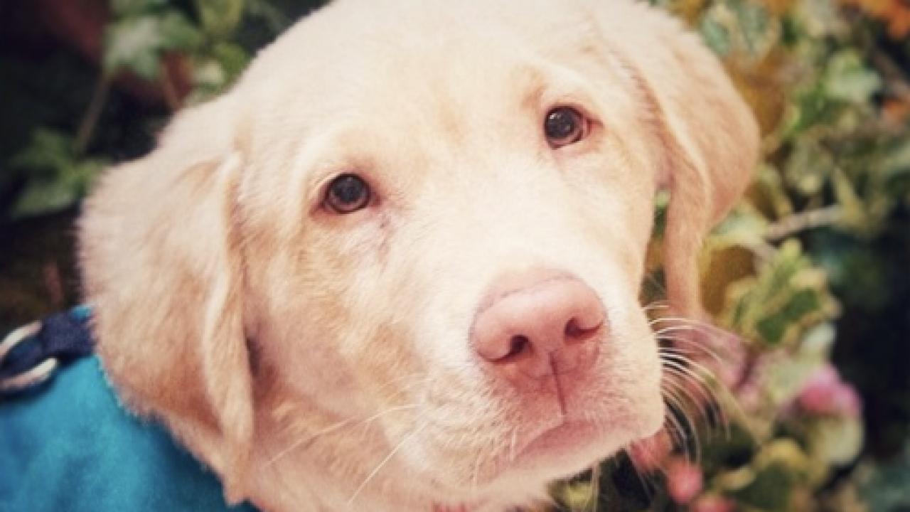 """Tributes posted for """"Fred the Service Dog"""""""