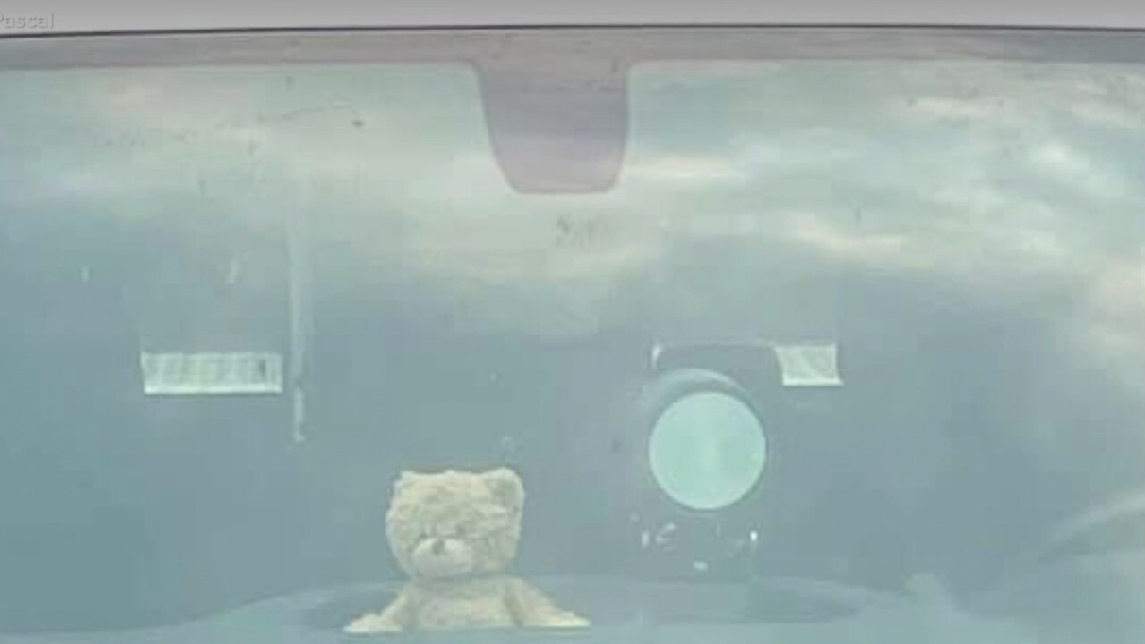 gnp teddy