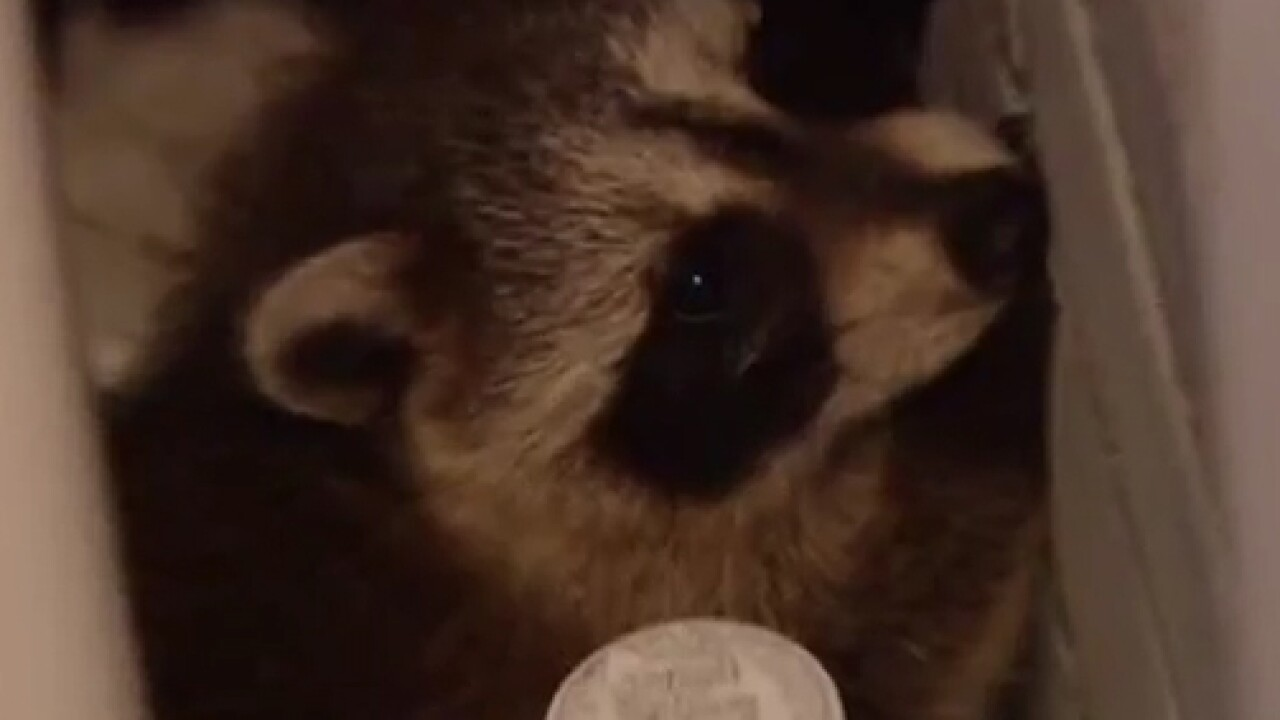 Man calls 911 after raccoons fall through ceiling