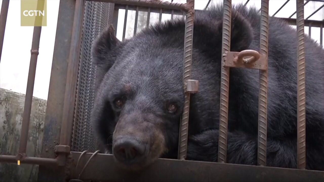 Family adopts 'dog,' discovers it's a black bear two years later