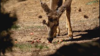 News5 Investigates: Illegal deer feeding