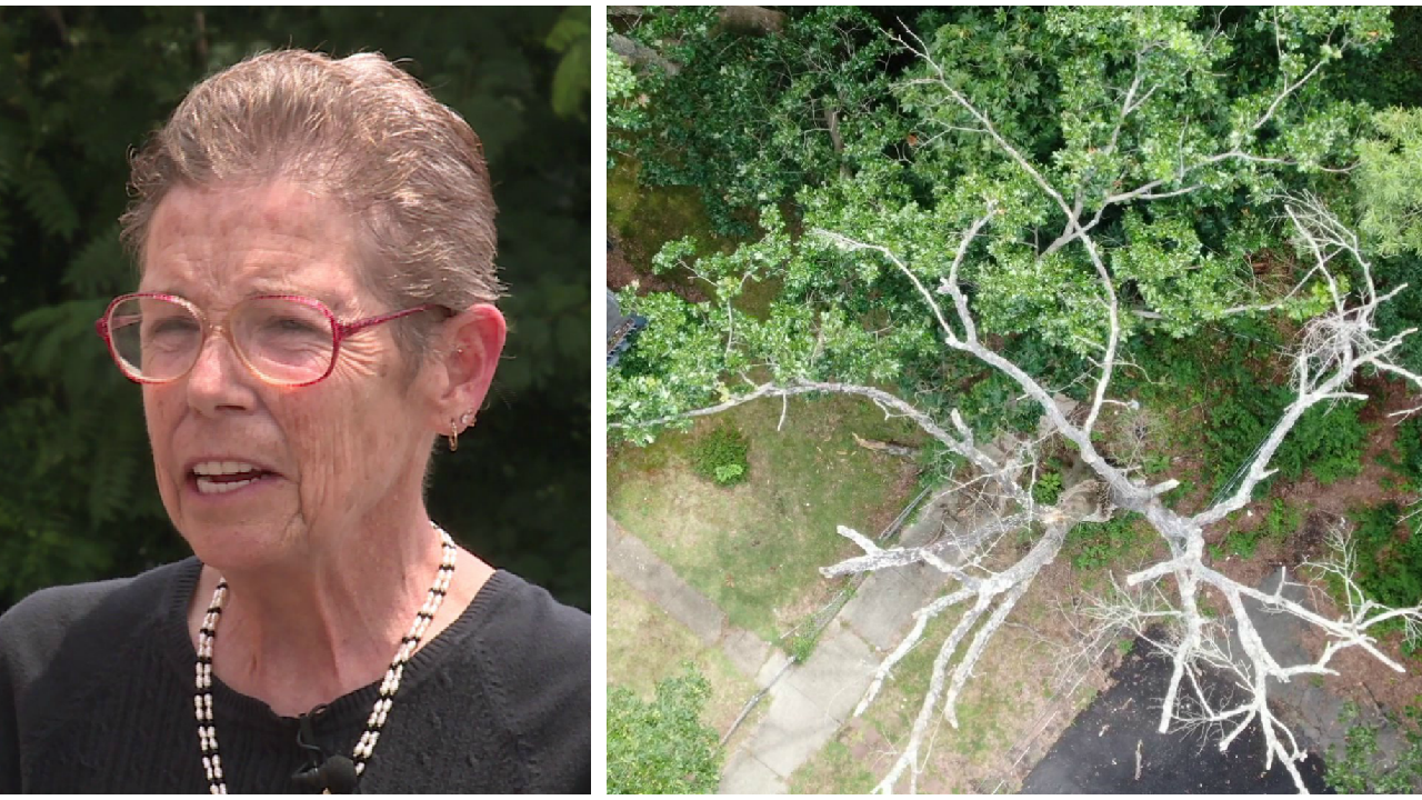Homeowner says dead city tree is creating a safety hazard for herfamily