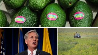 Ag Report: Avocados, Kevin McCarthy, Pesticides