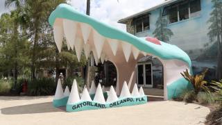 Gatorland: Florida's alligator theme park celebrates 70 years