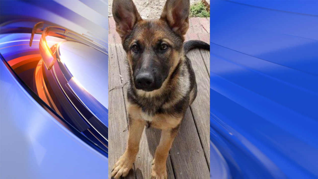 Dare County Sheriff's Office introduces newest Deputy K9