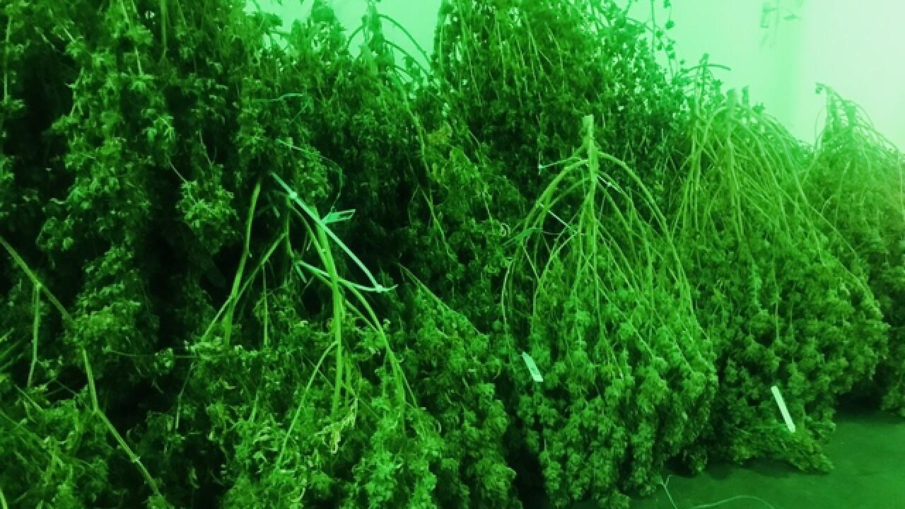 DPD busts million dollar marijuana operation