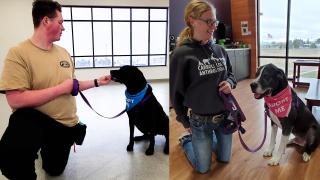 Carroll College dog adoption