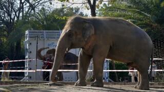 Pakistan Loneliest Elephant
