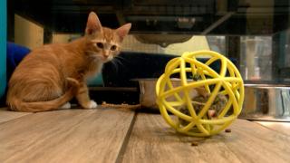 animals-cats-spca.PNG