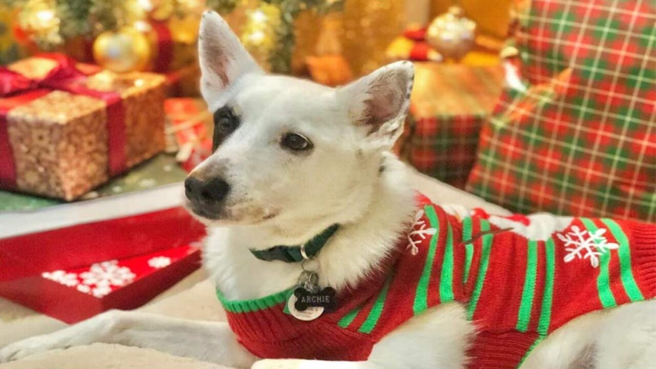 Best Dog Christmas Sweater 2020