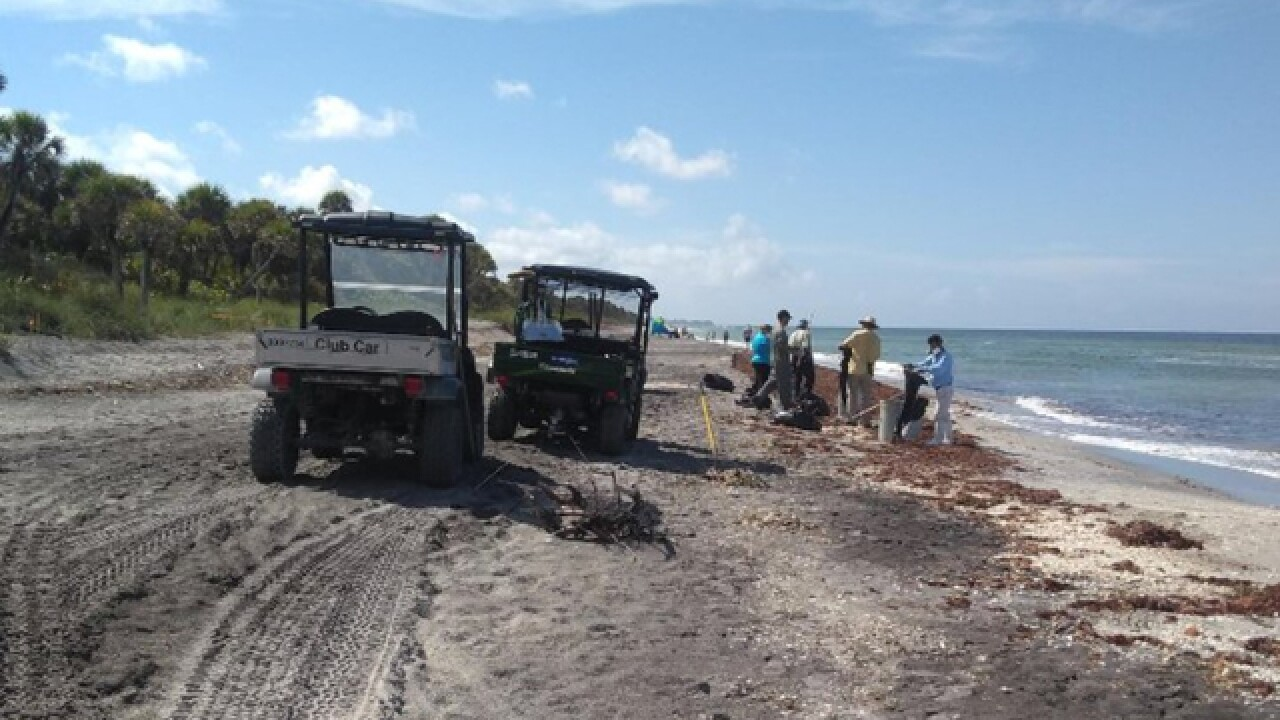 66+ tons of fish removed from Sarasota beaches