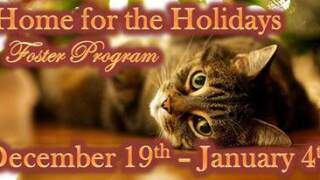 Home for the Holidays Pet Foster Program