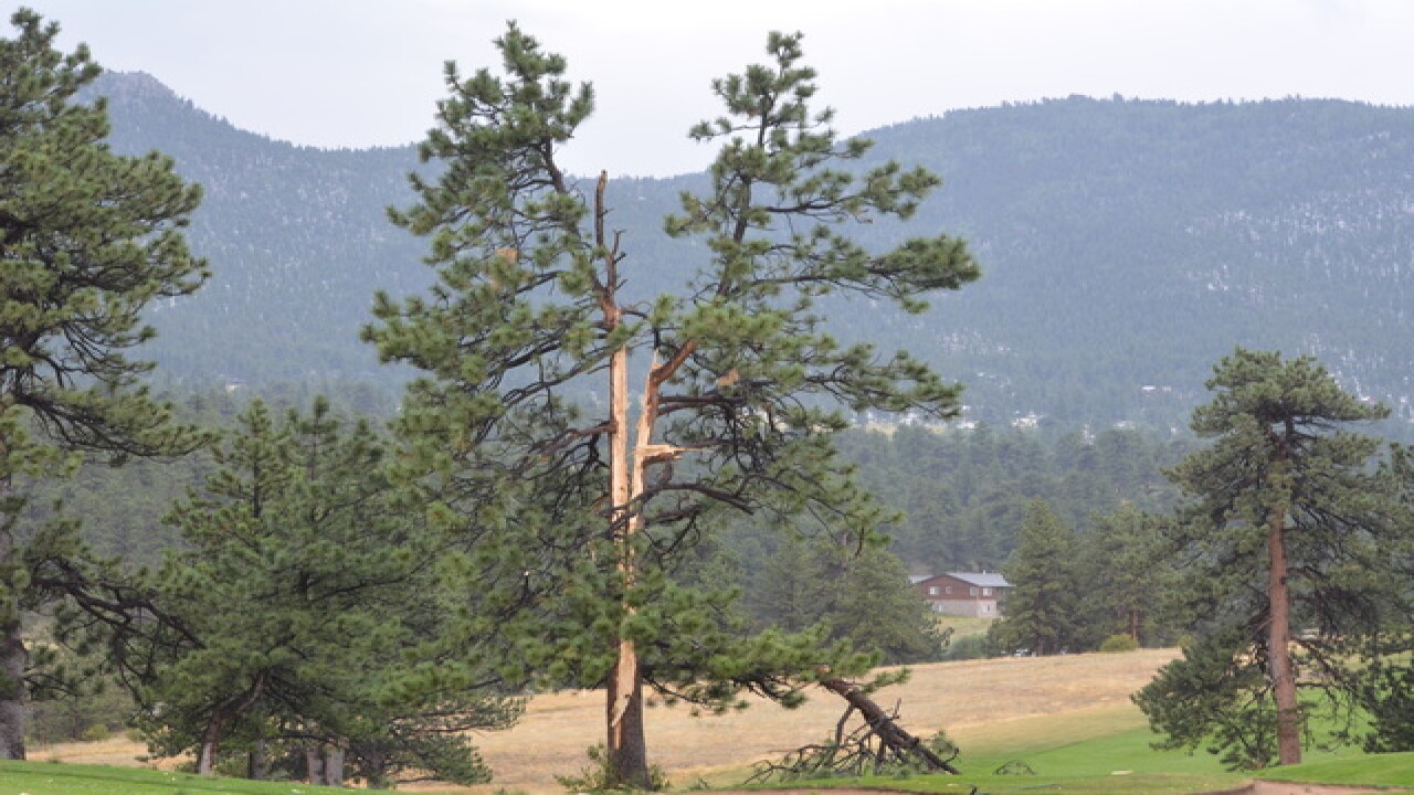 Lightning strike splits Estes Park tree in half
