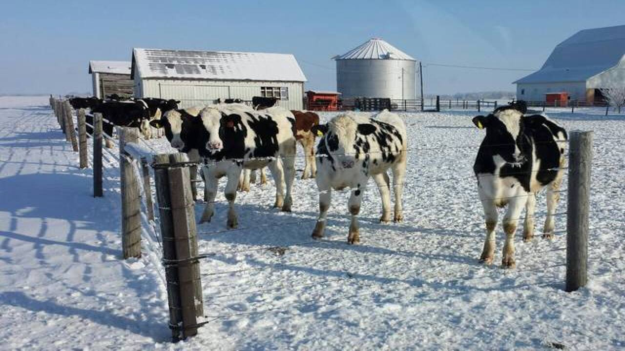 PHOTOS: Even animals have snow days on farms