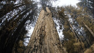 California Wildfires Redwoods