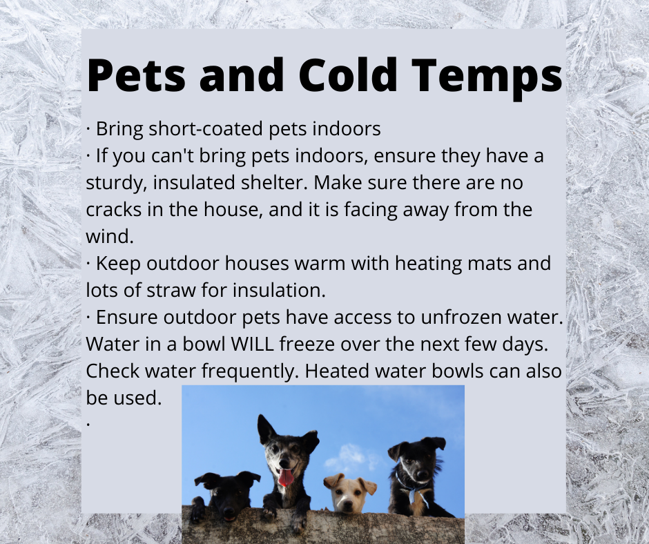 Pets and Cold Temps (1).png