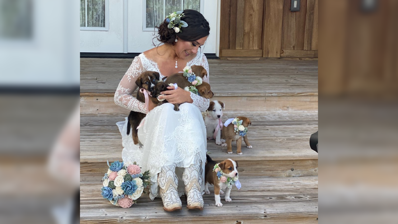 Florida couple replaces bouquets with rescue puppies to raise awareness about adoption