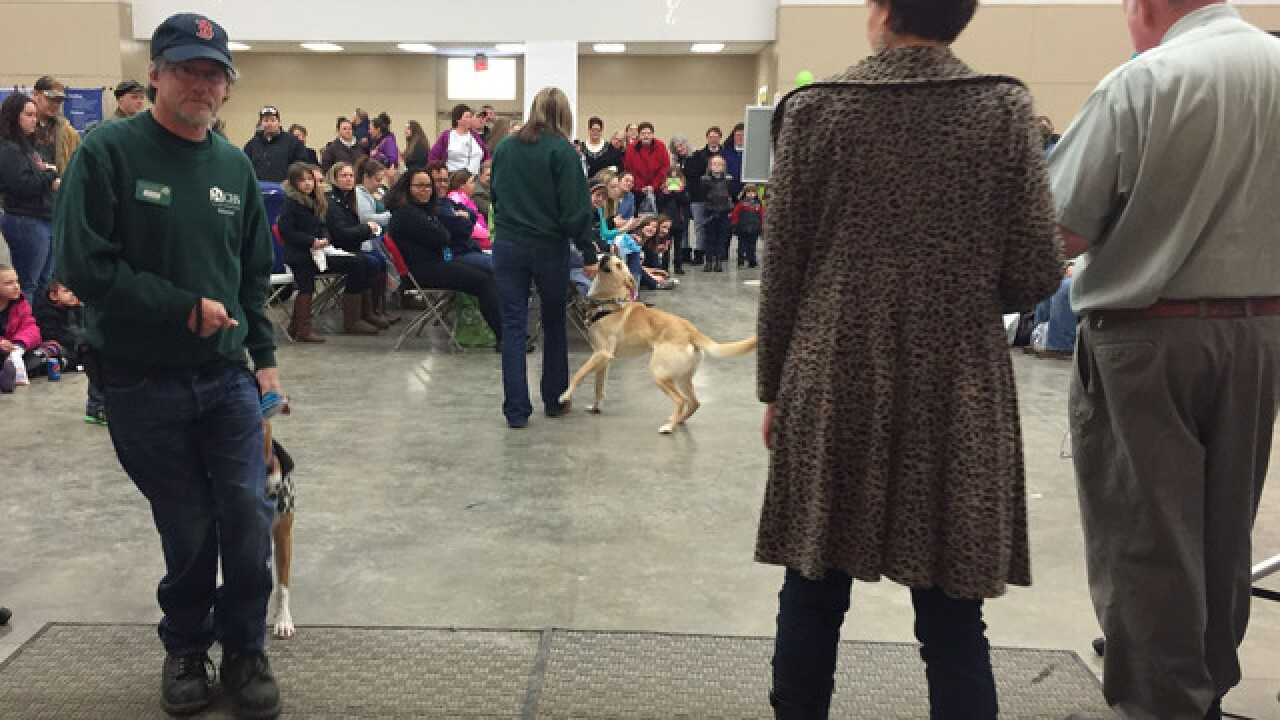 American 1 Paws & Claws Pet Expo raises $4,000