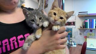 Video: Pet of the Week Recap