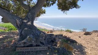 Pismo Preserve tree.jpeg