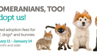 Animal Foundation offering free adoptions for dogs and cats 6 months and older
