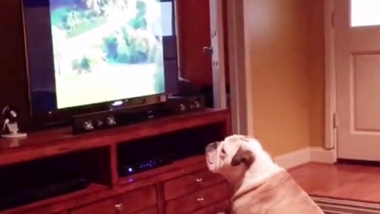 WATCH: Dog is taught hilarious lesson after not listening to owner