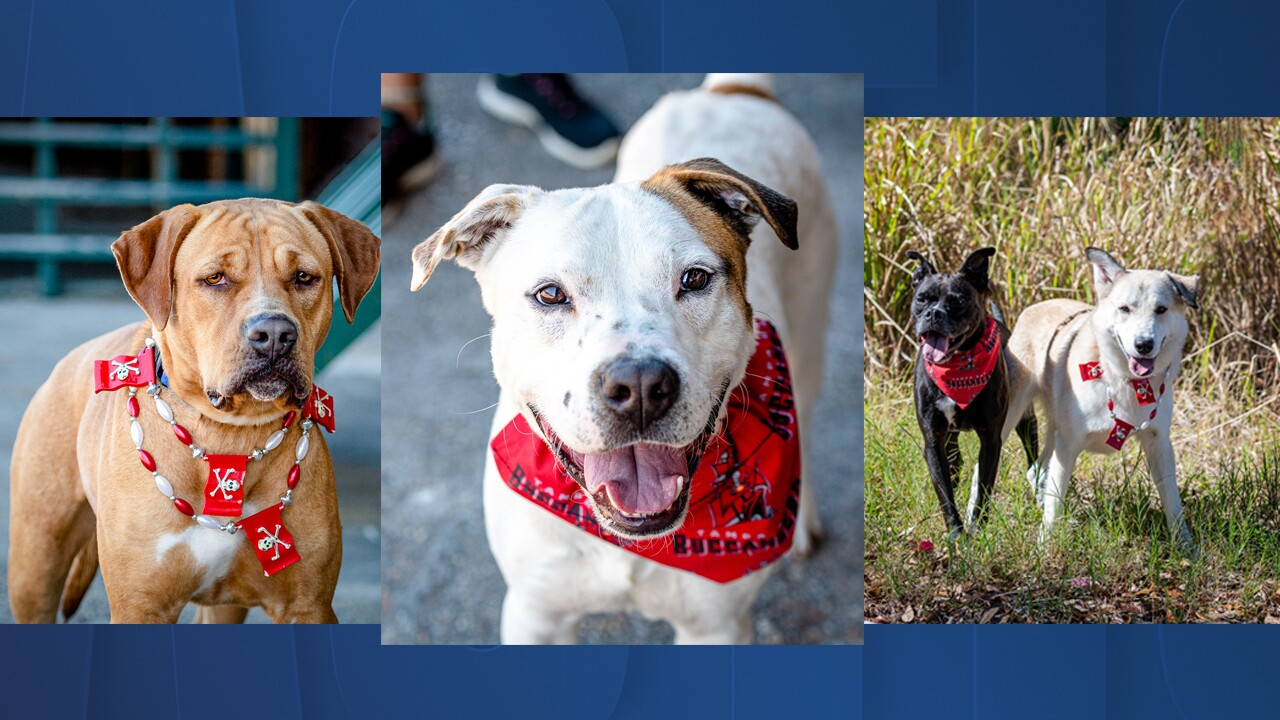 pets of the week Feb 5.jpg