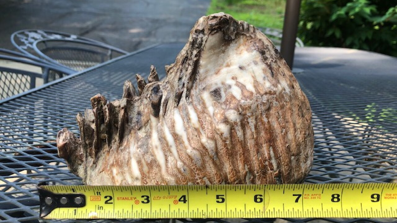 A boy discovered a prehistoric mastodon tooth during a family reunion in Ohio