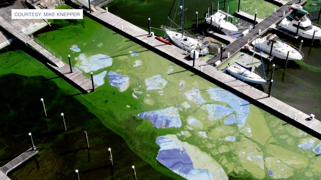 Pahokee Marina Algae April 2021